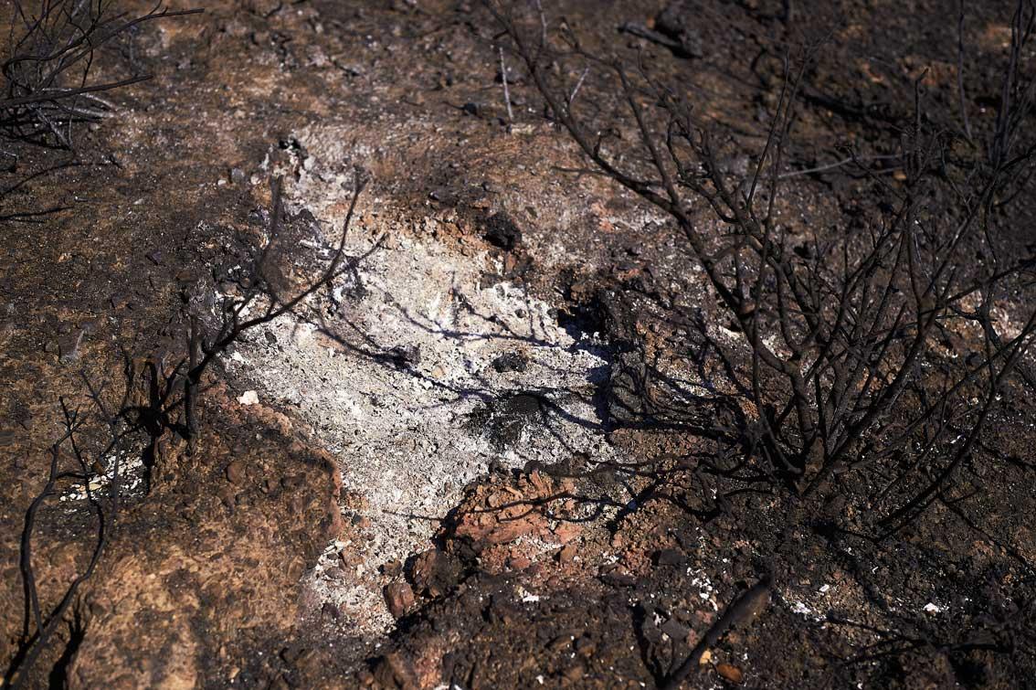 Les-cendres-de-la-bêtise-1492