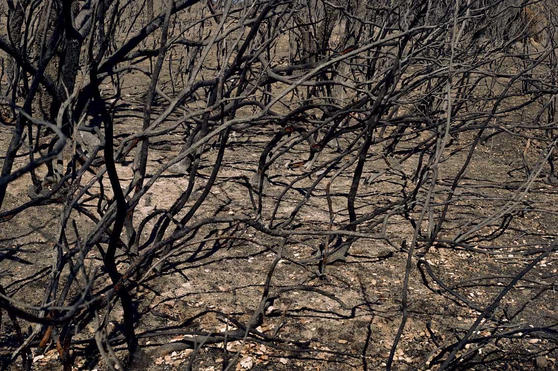 Les-cendres-de-la-bêtise-1971