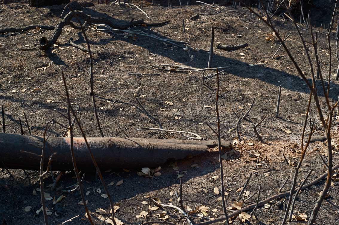 Les-cendres-de-la-bêtise-6286
