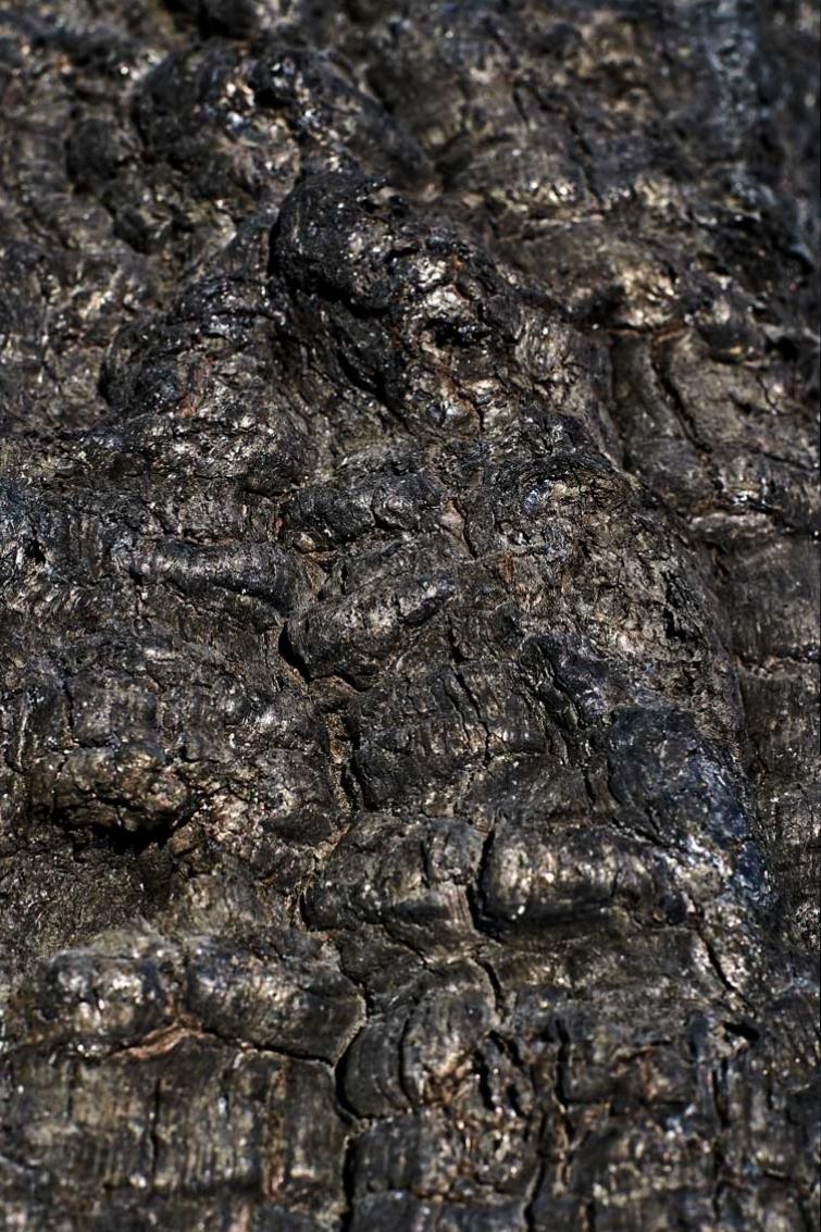 Les-cendres-de-la-bêtise-6374