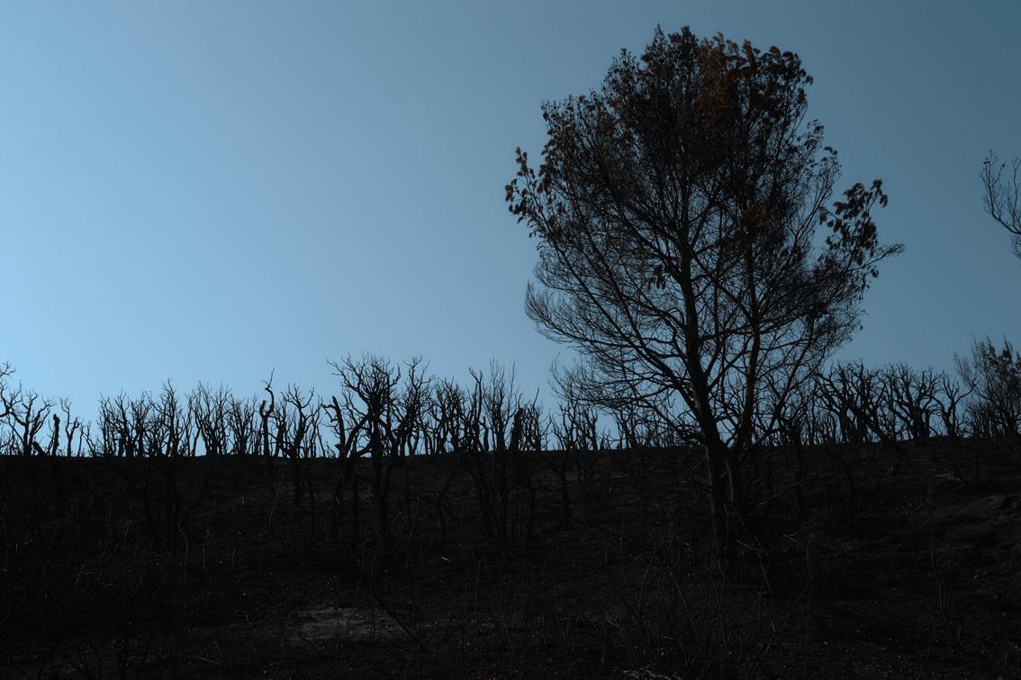 Les-cendres-de-la-bêtise-9051
