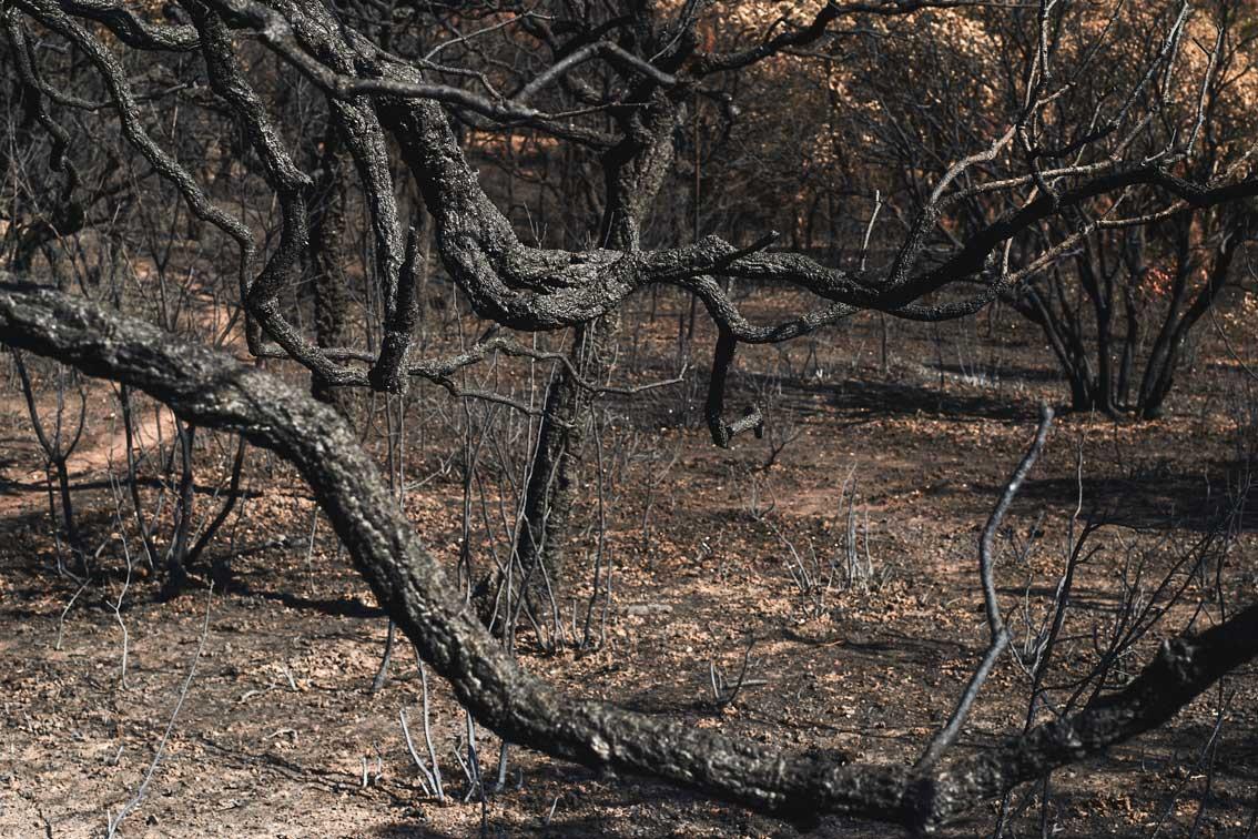 Les-cendres-de-la-bêtise-9949