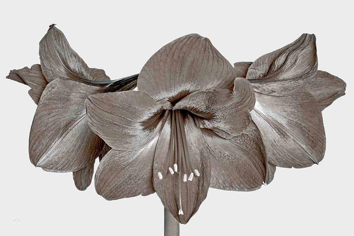 La-force-des-fleurs-0214-01