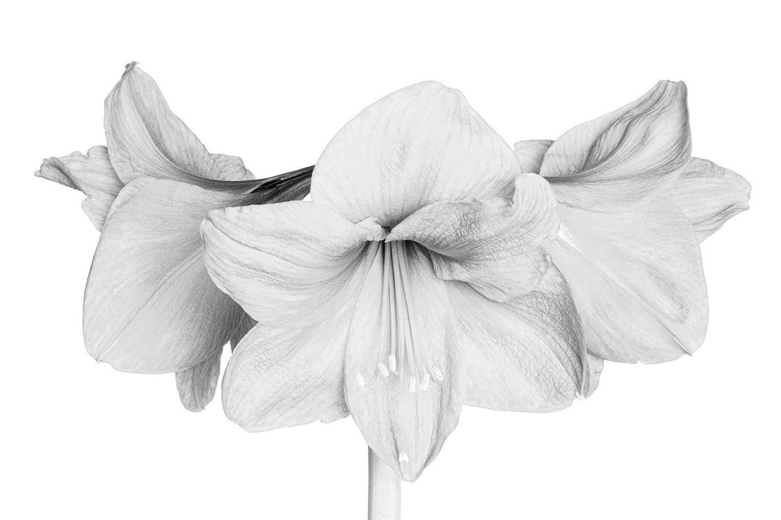 La-force-des-fleurs-0214