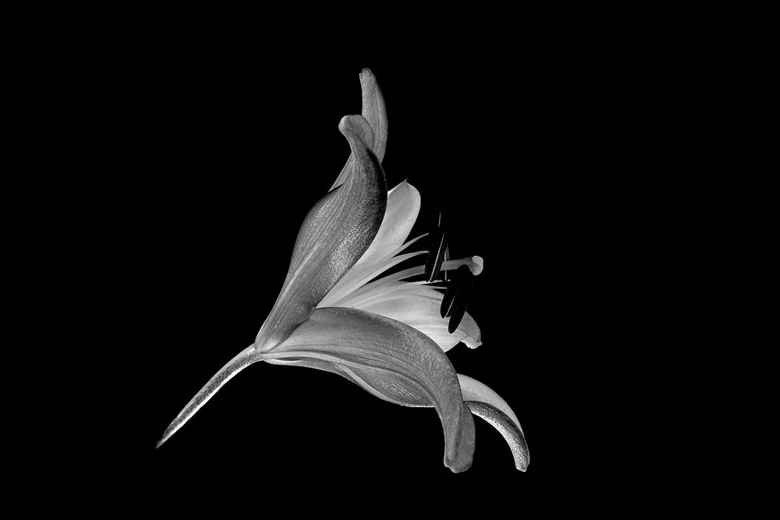 La-force-des-fleurs-0544