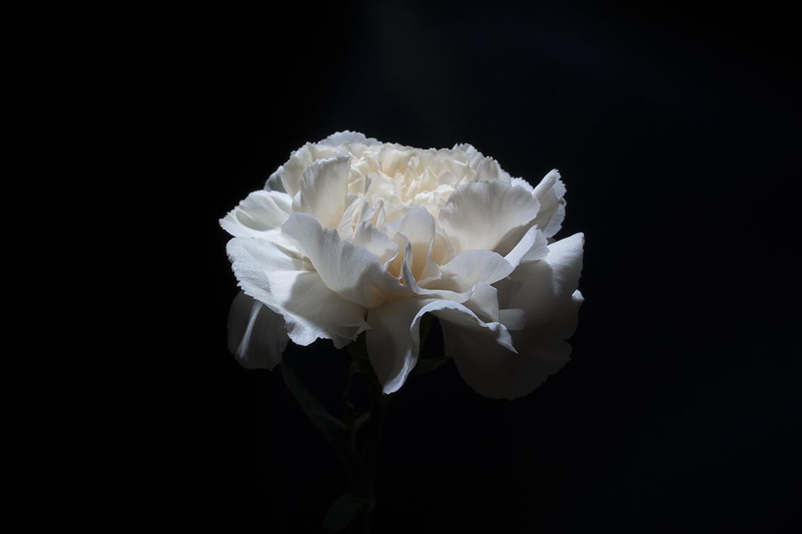 La-force-des-fleurs-1617