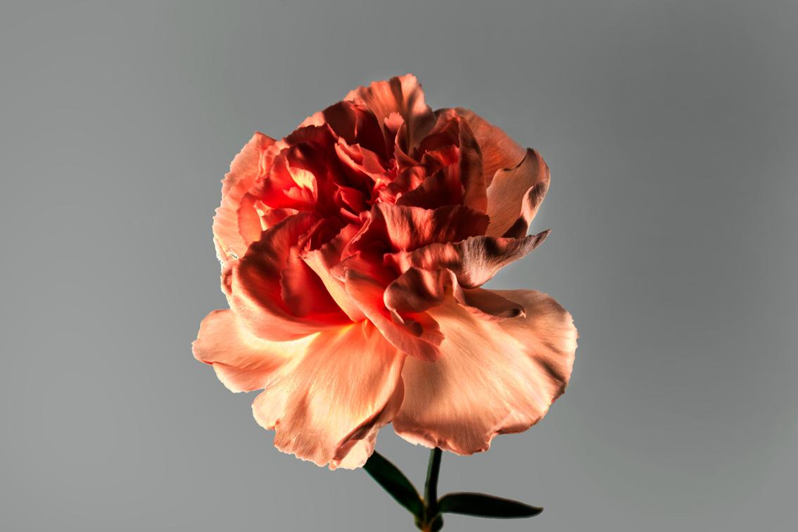 La-force-des-fleurs-2527