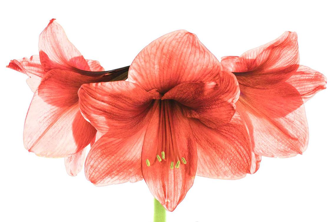 La-force-des-fleurs-2862