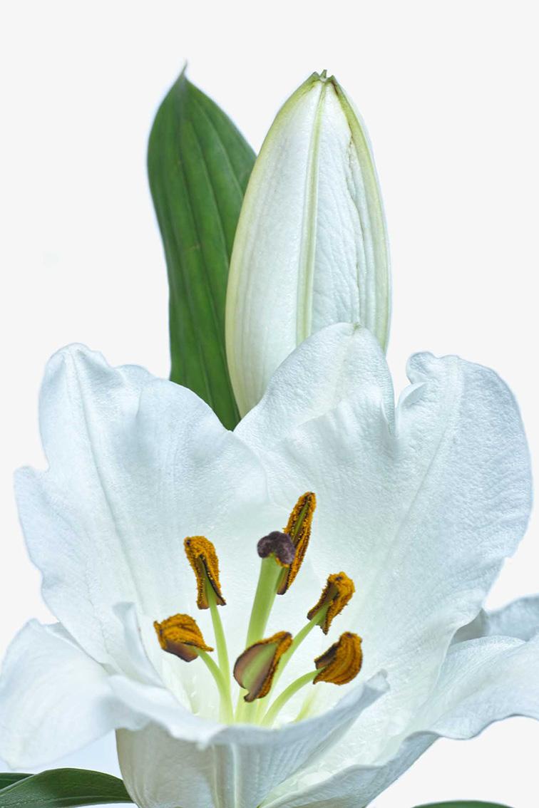 La-force-des-fleurs-3120-02