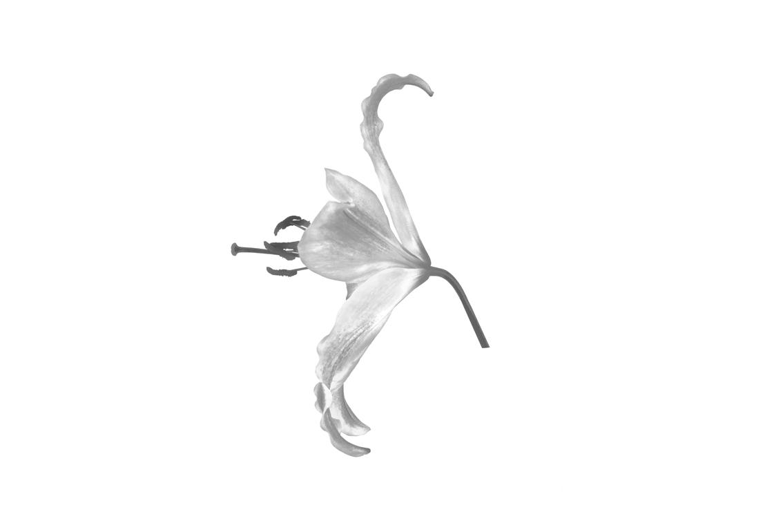 La-force-des-fleurs-4978-02