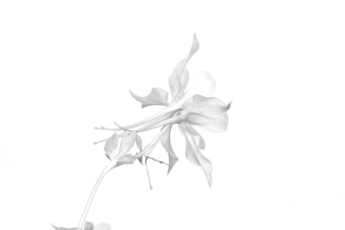 La-force-des-fleurs-5562
