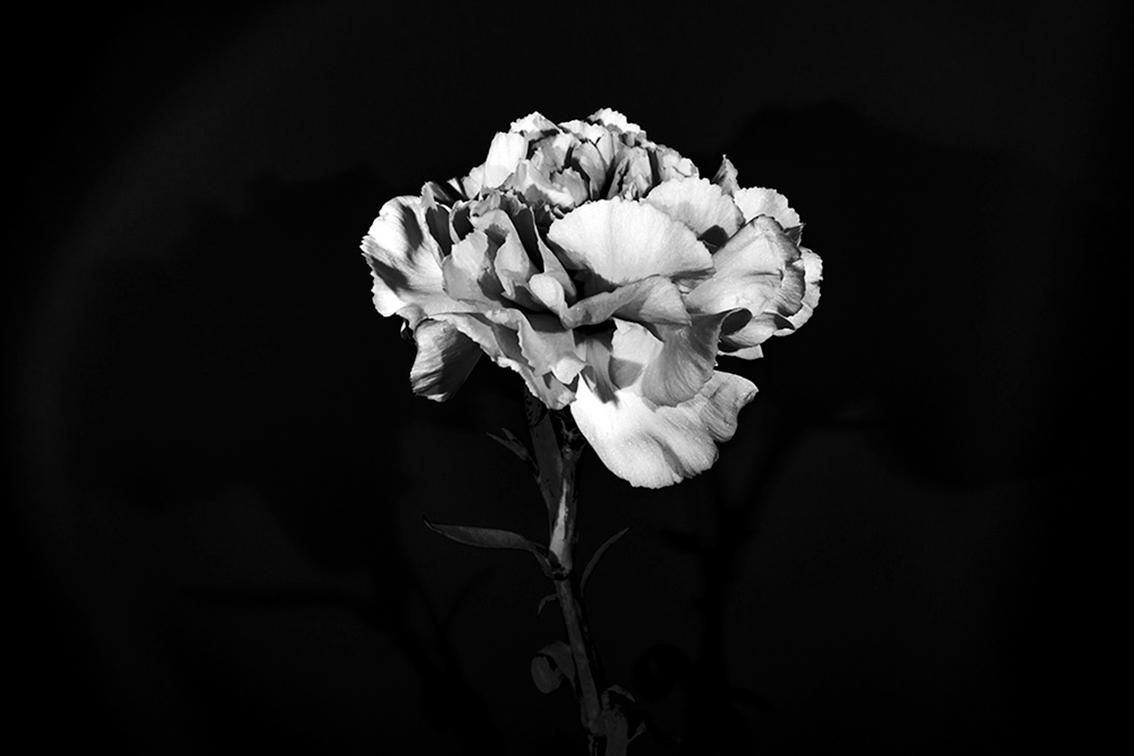 La-force-des-fleurs-5682