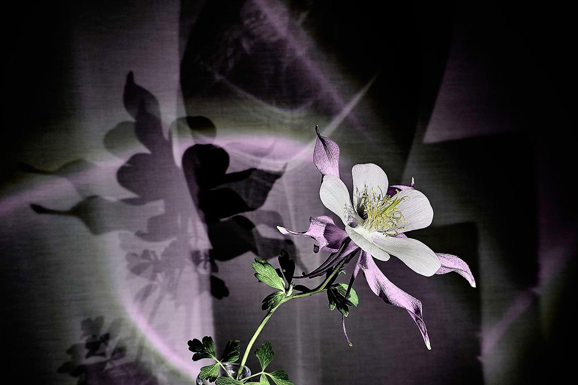 La-force-des-fleurs-6358