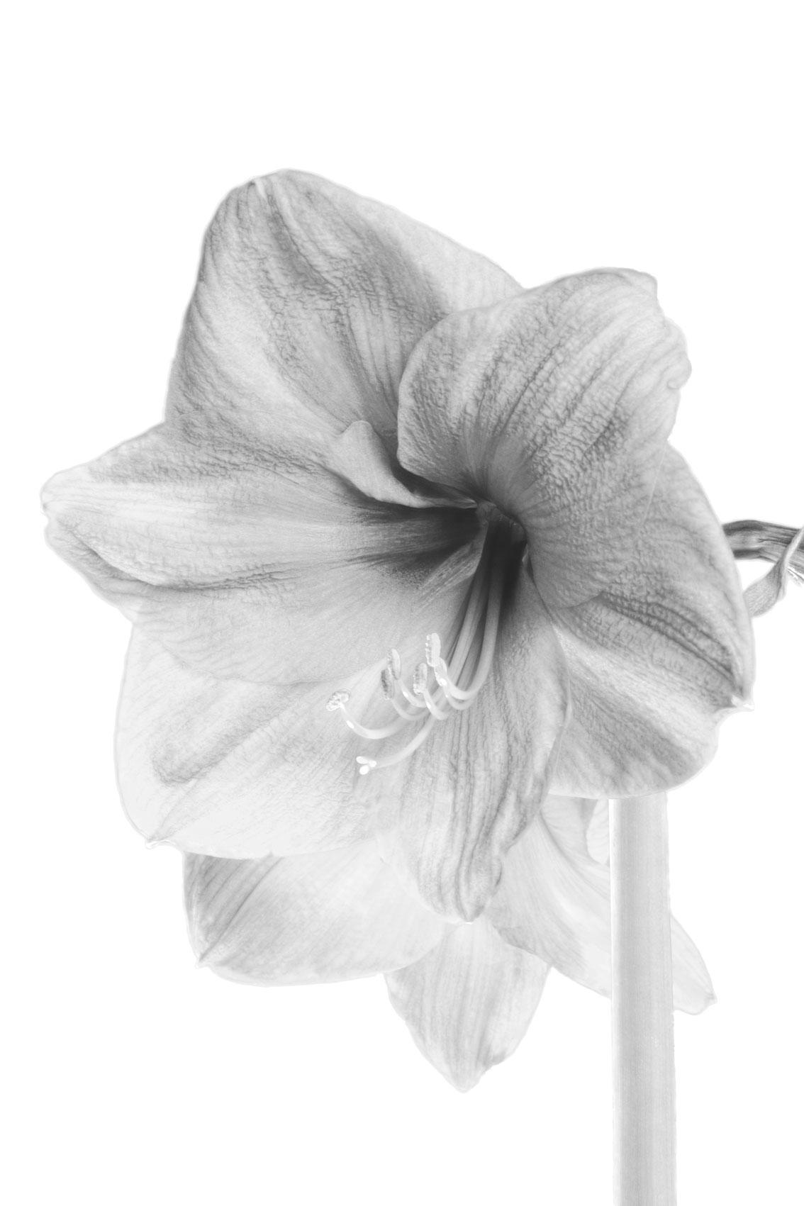 La-force-des-fleurs-7055