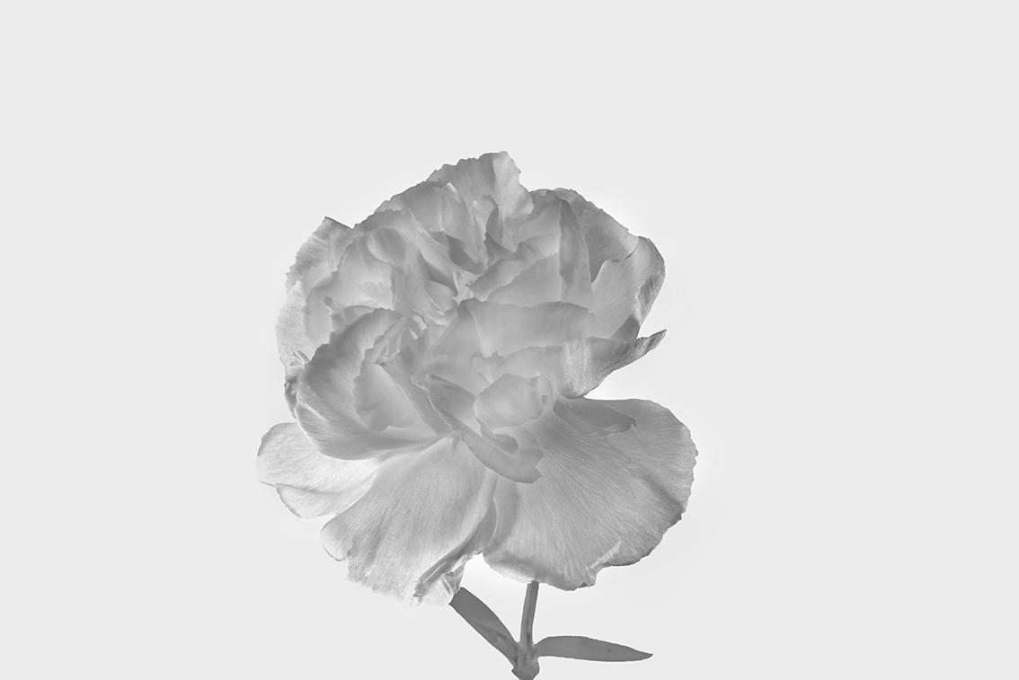 La-force-des-fleurs-7631