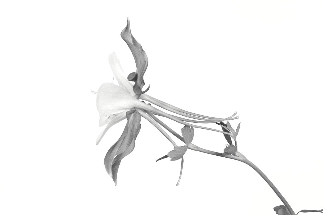La-force-des-fleurs-8003