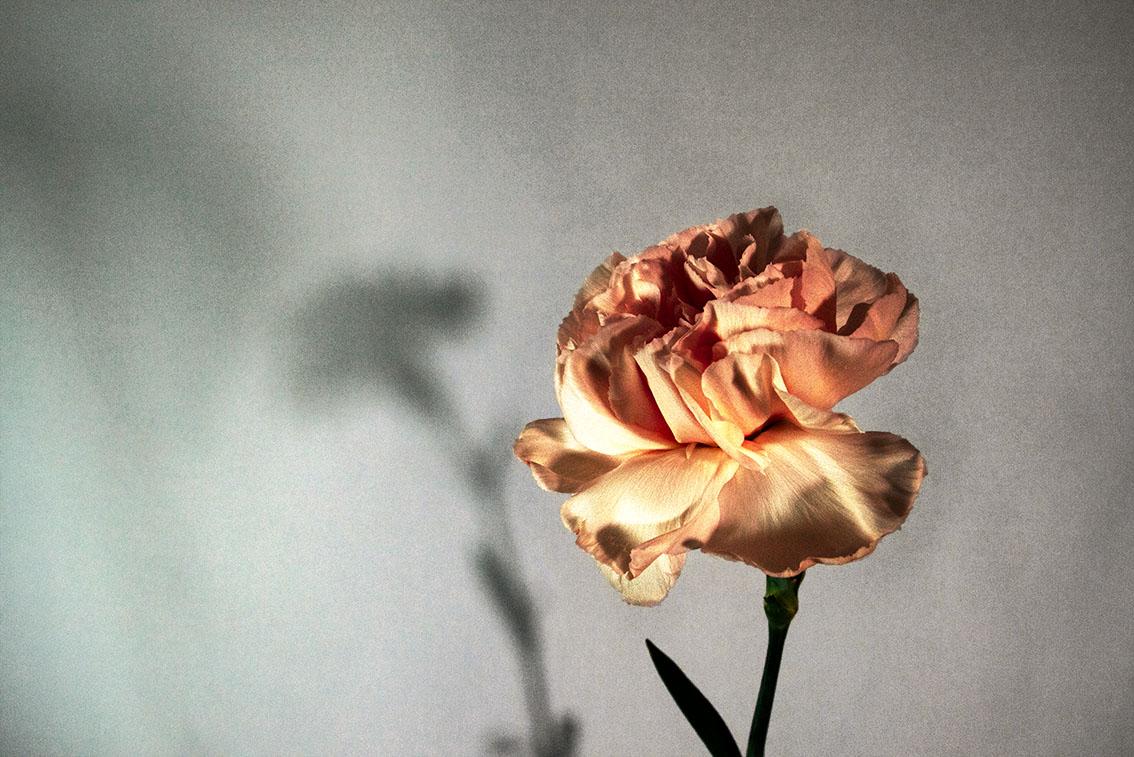 La-force-des-fleurs-8050