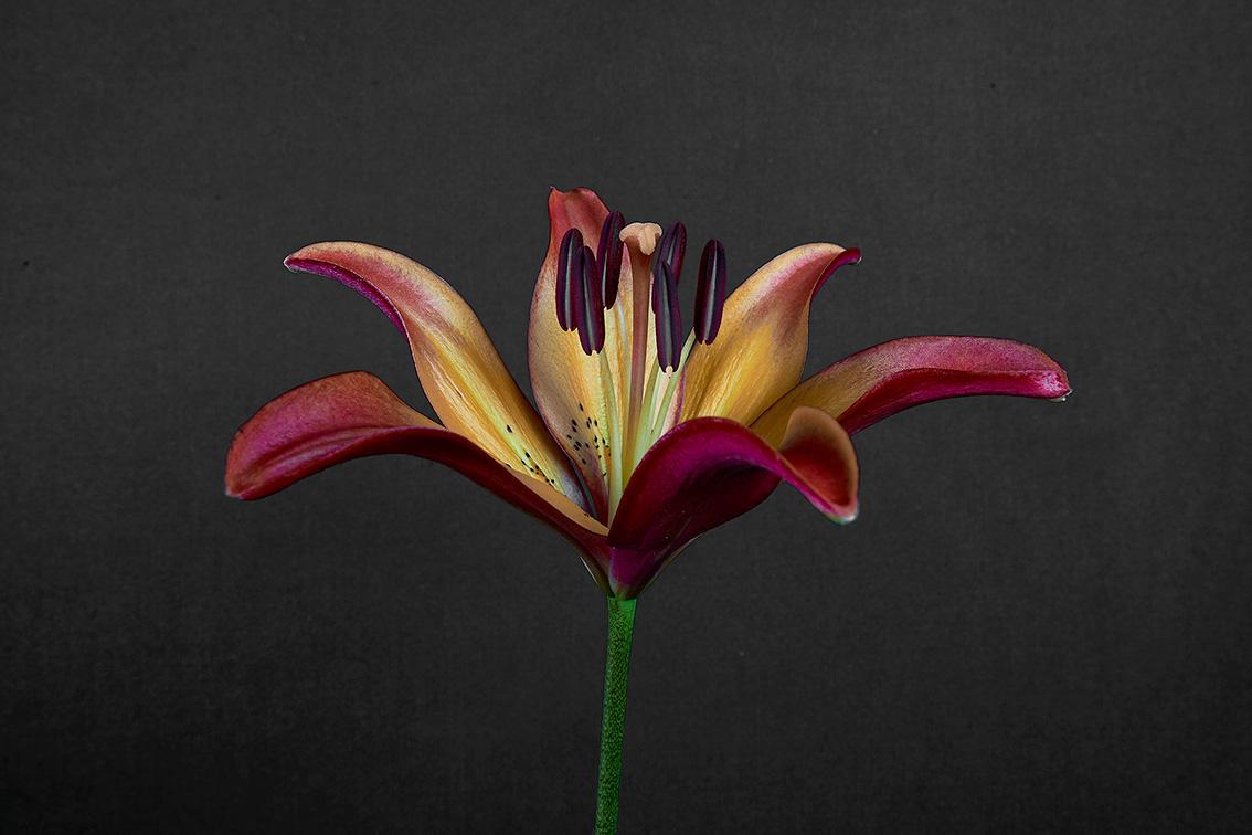 La-force-des-fleurs-8506