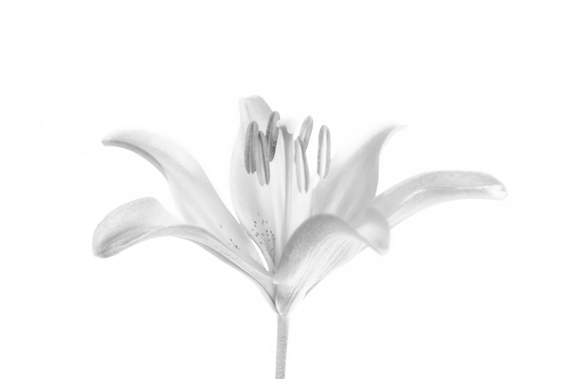 La-force-des-fleurs-8788