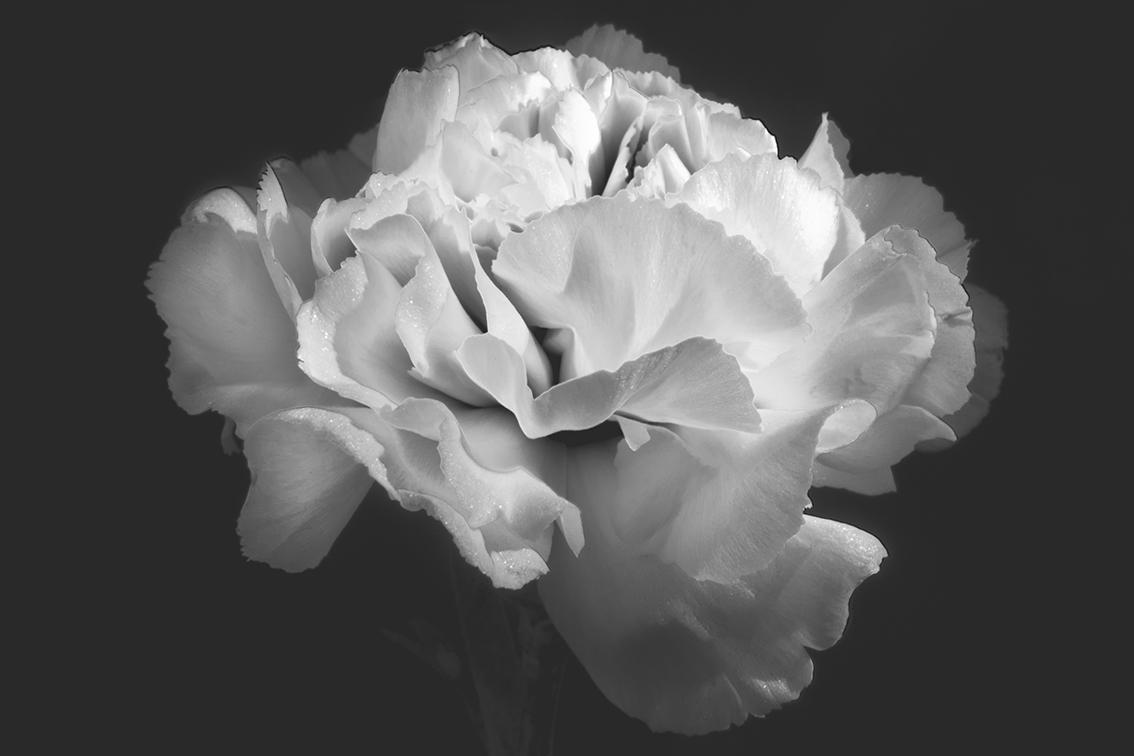La-force-des-fleurs-8850