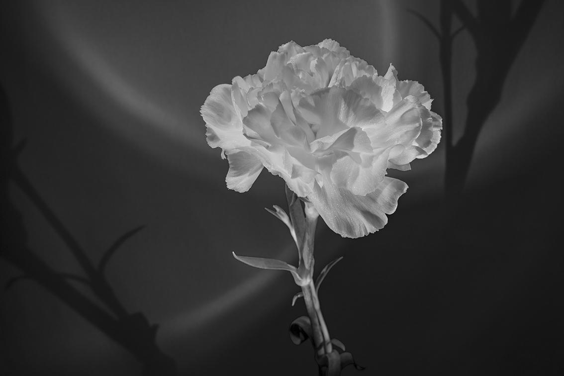 La-force-des-fleurs-9274